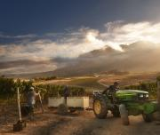 Workers in Wine Farm harvest season