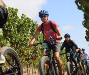 Vineyards, e-bike