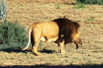 Cape Town two days Safari