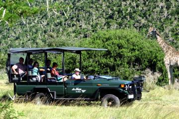 kruger park safari game drive extended tour