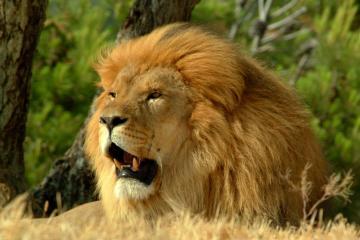 Kruger park safari experience