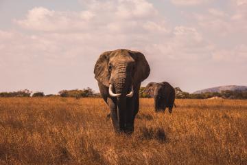 safari day tour