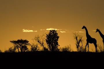 private game drive extended tour