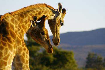 cape town package safari