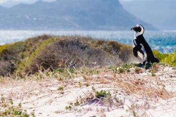 Cape Town peninsula day tours